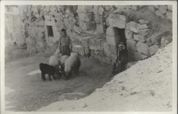Tomb Of Lazarus, Bethany - Carte 14 X 9 Glacée - Israel