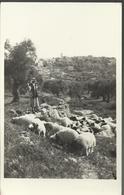 Betnelehem From Shepherd's Field - Carte 14 X 9 Glacée - - Israel