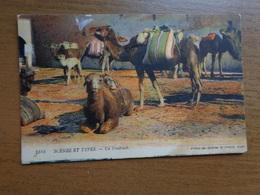 Kameel, Camel / Un Fondouck --> Unwritten - Animaux & Faune