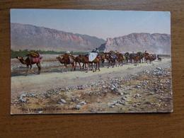 Kameel, Camel / Une Caravane De Nomades --> Written - Animaux & Faune