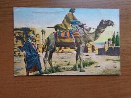 Kameel, Camel / Chameau Et Chamelier --> Written - Animaux & Faune