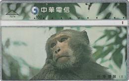 Telecarte CHINE -  SINGE - Jungle