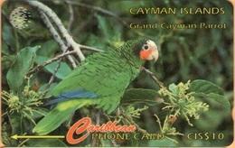 Cayman Island - CAY-11B, GPT, 11CCIB, Grand Cayman Parrot (Amazona Leucocephala Caymanensis), 10$, 18,700ex, 1995, Used - Kaimaninseln (Cayman I.)