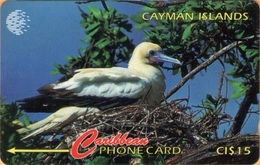 Cayman Island - GPT, CAY-11D, GPT, 11CCID, Red Footed Booby, Bird, 15$, 14,100ex, 1995, Used - Kaimaninseln (Cayman I.)