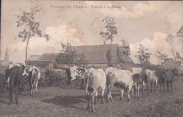 Paturages Des Flandres Rentrée à La Ferme (Vache Koe) Uitg: Defrène Nederbrakel Brakel ? Melkbloem Unica - Brakel