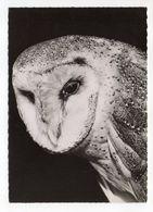 Oiseau -- Chouette  Effraie  --    1958--    Cachet  PP  Montreuil Sous Bois --93 - Birds