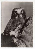 Oiseau -- Chouette  Des Bois   --  1958 --    Cachet  PP  Montreuil Sous Bois -- 93 - Birds