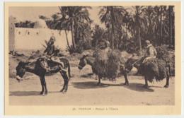 Tozeur - Retour A L'Oasis - Tunisie