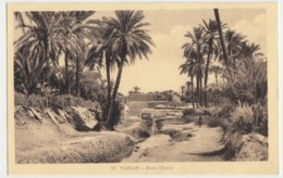 Tozeur - Dans L'Oasis - Tunisie