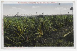 Brazil - Una Plantacao De Abacaxis (pineapples) - Unclassified