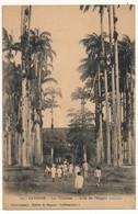 CPA - CAYENNE - Les Palmistes - Allée De L'Hopital Colonial - Cayenne