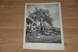 5266- UNTERM LINDENBAUM , SCHNEIDER KARTE NR. 50158  REICHENAU - Sin Clasificación