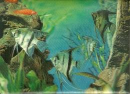 """Cartolina Stereoscopica (3D, Visiorelief) """"Angel Fishes"""" Pesci - Cartoline Stereoscopiche"""