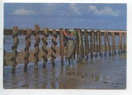 Elevage Des Moules Sur Les Bouchots (di Mario) Mytiliculture - Fishing