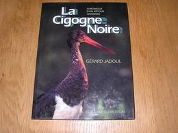 LA CIGOGNE NOIRE Chronique D'un Retour Annoncé G Jadoul Nature Oiseaux Ornithologie Migration Afrique Europe Oiseau - Animaux