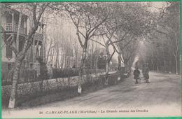 56 - Carnac Plage - La Grande Avenue Des Druides - Editeur: Nozais N°20 - Carnac