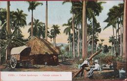 Old Postcard Tarjeta Postal Cuba Cuban Landscape Paisaje Cubano Palm Forestry Palm Tree Forest Colonial Period - Cuba