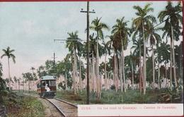 Rare Old Postcard Tarjeta Postal Cuba Camino De Guanajay Train Tren Ferrocarril Artemisa Forest Colonial Period - Cuba