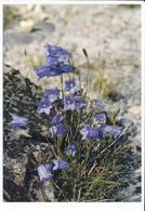 Tikiusaaq Grønlandsk Blåklokke Harebell Campanula Rotundifolia Arctic Flowers Plant Postcard - 1990 Unused - Greenland