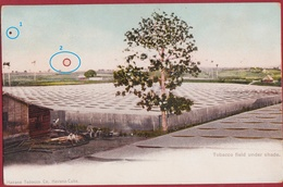 Rare Old Postcard Tarjeta Postal Cuba Tobacco Field Under Shade Havana Tobacco Company Colonial Period Cigar - Cuba