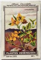 Chromo Image Album Chocolats PETER, CAILLER, KOHLER, NESTLE, Série LXXX N° 1 - PLANTES VENENEUSES - CHELIDOINE - Nestlé