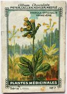 Chromo Image Chocolats PETER CAILLER KOHLER NESTLE Série LXXXI N° 7 PLANTES MEDICINALES - PRIMULA OFFICINALIS PRIMEVERE - Nestlé
