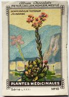 Chromo Image Chocolats PETER CAILLER KOHLER NESTLE Série LXXXI N° 10 PLANTES MEDICINALES - SEMPERVIVUM TECTORUM JOUBARBE - Nestlé