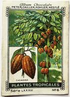 Chromo Image Album Chocolats PETER, CAILLER, KOHLER, NESTLE, Série LXXXVI N° 6 - PLANTES TROPICALES - CACAOYER - Nestlé