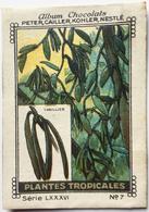 Chromo Image Album Chocolats PETER, CAILLER, KOHLER, NESTLE, Série LXXXVI N° 7 - PLANTES TROPICALES - VANILLIER - Nestlé