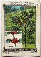 Chromo Image Album Chocolats PETER, CAILLER, KOHLER, NESTLE, Série LXXXVI N° 8 - PLANTES TROPICALES - CAFEIER - Nestlé
