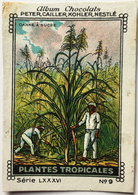 Chromo Image Album Chocolats PETER, CAILLER, KOHLER, NESTLE, Série LXXXVI N° 9 - PLANTES TROPICALES - CANNE A SUCRE - Nestlé