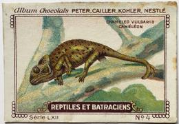 Chromo Image Chocolats PETER CAILLER KOHLER NESTLE Série LXII N° 4 - REPTILES ET BATRACIENS - CHAMELEO VULGARIS CAMELEON - Nestlé