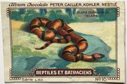 Chromo Image Chocolats PETER CAILLER KOHLER NESTLE Série LXII N° 10 - REPTILES ET BATRACIENS - ELAPS CORALLINUS ELAPS - Nestlé