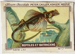 Chromo Image Chocolats PETER CAILLER KOHLER NESTLE Série LXII N° 7 - REPTILES ET BATRACIENS - DRAGO VOLANS - DRAGON - Nestlé
