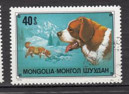 Mongolie, Mongolia, Chien, Dog, Sauvetage En Montagne, Mountain Rescue, Croix-rouge, Red Cross, Saint-bernard, Escalade, - Chiens