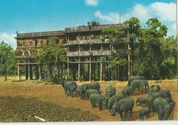 KENYA ELEPHANTS (311) - Kenia