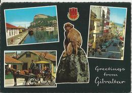 GREETINGS FROM GIBRALTAR  (336) - Gibilterra