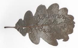 """16 - BRACONNE - MILITARIA - TRAVAIL DE POILU - Feuille Chène Sculptée à L'épingle   -  """" Souvenir De La Braconne """" - 1914-18"""