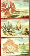 Les Algues Marines - Lot De 5 Cartes - (illustrations) - Fleurs, Plantes & Arbres