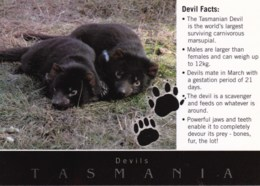 The Tasmanian Devil, Tasmania - Unused - Australie