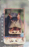 Afrique Du Sud,SOUTH AFRICA, Chip MTN, Fauna, Hippopotamus - Afrique Du Sud