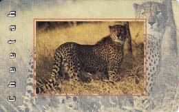 Afrique Du Sud,SOUTH AFRICA, Chip MTN, Fauna, Cheetah - Afrique Du Sud