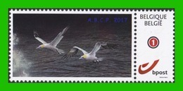 BUZIN - Fou De Bassan - ABCP 2017 - 1985-.. Birds (Buzin)