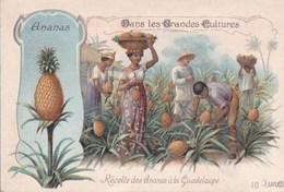 GUADELOUPE CHROMO Bon Point  Les Grandes CULTURES Travaux Des CHAMPS Récolte Des ANANAS  SCAN DOS - Guadeloupe