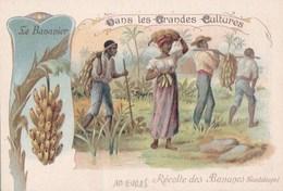 GUADELOUPE CHROMO PUB CAFE MARTIN  Les Grandes CULTURES Travaux Des CHAMPS Récolte Des BANANES  SCAN DOS - Guadeloupe
