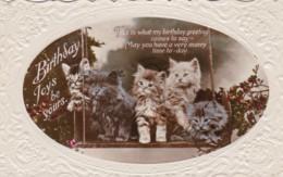 AP94 Birthday Greetings - Cats On A Swing - Birthday