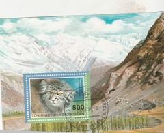 CHAT SAUVAGE   N11 1979 - Tadjikistan