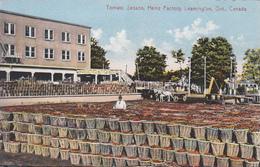 Leamington Ontario Canada - Tomato Heinz Company  Factory - Food Aliments Industrie - 2 Scans - Ontario