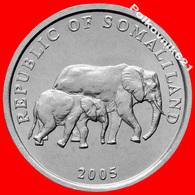 Somaliland  5 Shillings 2005 - Monnaies