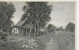 AK 0060  Malerische Dorfstätten ( Bauernhof , Bäume ) - Motiv Um 1913 - Bäume